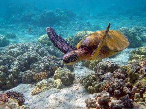 diving courses in watamu