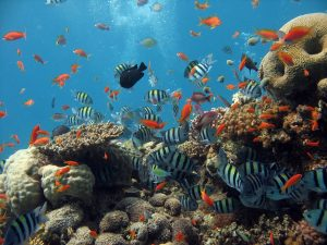 Scuba diving in Watamu